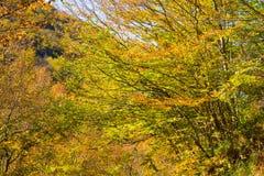Baumaste mit Gelb- und Grünblättern im Herbst, Italien lizenzfreie stockfotografie