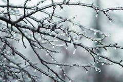 Baumaste mit glattem transparentem Eis auf einem Winter Stockbild