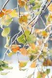 Baumaste mit glattem transparentem Eis auf einem Winter Lizenzfreies Stockbild