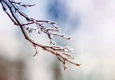 Baumaste mit glattem transparentem Eis auf einem Winter Stockfoto