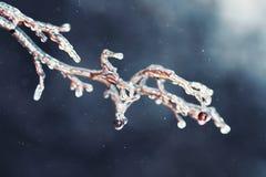 Baumaste mit glattem transparentem Eis auf einem Winter Stockfotografie