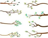 Baumaste mit grünen Blättern lizenzfreie abbildung