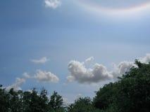 Baumaste mit grünen Blättern und blauem Himmel mit Sun-Halo Lizenzfreie Stockfotos