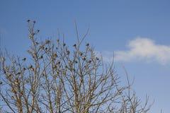 Baumaste mit kleinen Vögeln im Park und Himmel mit Wolken Stockfotos