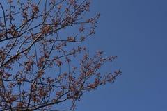 Baumaste mit neuen Blättern Stockfotos