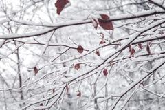 Baumaste mit Schnee Lizenzfreie Stockfotografie