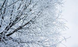 Baumaste mit Show und Frost, Winter Lizenzfreies Stockfoto