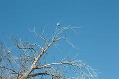 Baumaste mit Vogel Stockbild