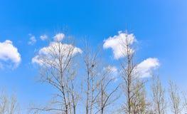 Baumaste mit Wolken und blauem Himmel im Vorfrühling Stockbild