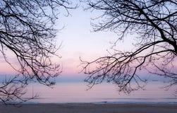 Baumaste silhouettieren gegen den Himmel und das Meer Lizenzfreies Stockbild