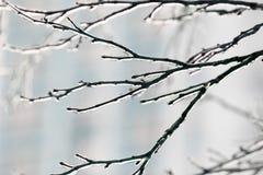 Baumaste umfasst mit einem transparenten glänzenden Eis im Winter Lizenzfreie Stockbilder