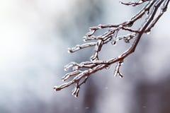 Baumaste umfasst mit einem transparenten glänzenden Eis im Winter Stockfotos