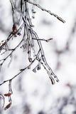 Baumaste umfasst mit einem transparenten glänzenden Eis im Winter Lizenzfreies Stockfoto