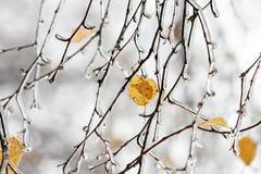 Baumaste umfasst mit einem transparenten glänzenden Eis im Winter Lizenzfreie Stockfotografie