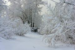 Baumaste umfasst mit Frost stockfotografie