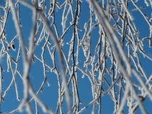 Baumaste umfasst mit Frost Lizenzfreie Stockfotografie