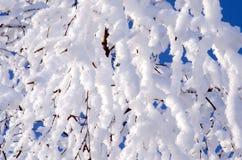 Baumaste umfasst mit Schnee auf Hintergrund des blauen Himmels Lizenzfreies Stockbild