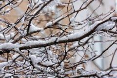 Baumaste umfasst mit Schnee und Eis Lizenzfreie Stockfotografie