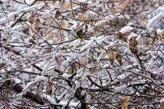 Baumaste umfasst mit Schnee und Eis Stockfoto