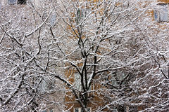 Baumaste umfasst mit Schnee und Eis Lizenzfreies Stockbild