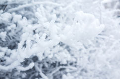 Baumaste umfasst mit Show und Frost Stockfoto