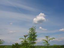 Baumaste und Grün-Blätter mit blauer Himmel-Landschaft Backgroun Lizenzfreies Stockfoto
