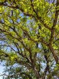 Baumaste und Himmel an einem sonnigen Tag Lizenzfreies Stockbild