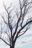 Baumaste und Himmelhintergrund Lizenzfreies Stockbild