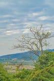 Baumaste und Vögel Lizenzfreies Stockfoto
