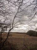 Baumastherbstwinterschattenbild-Bauernhoffeld unfruchtbar stockfoto
