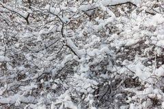 Baumasthintergrund im Winterwald Lizenzfreie Stockbilder