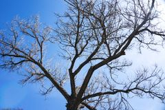 Baumastschattenbild auf einem Hintergrund des blauen Himmels stockfotos