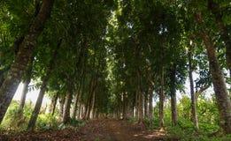 Baumbahn auf den Philippinen lizenzfreies stockfoto