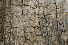 Baumbarke Stockbild
