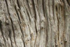 Baumbarkebeschaffenheit Lizenzfreie Stockfotos