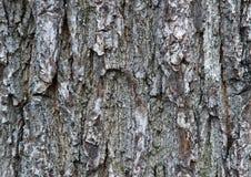 Baumbarkedetails stockfoto
