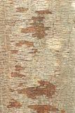 Baumbarkehintergrund Lizenzfreie Stockbilder