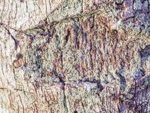 Baumbeschaffenheit mit Form und Mehltau Stockbilder