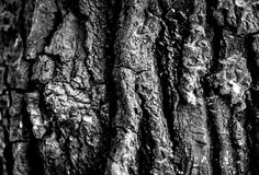 Baumbeschaffenheit in Schwarzweiss Stockfotografie