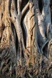 Baumbeschaffenheitshintergrund Lizenzfreies Stockfoto