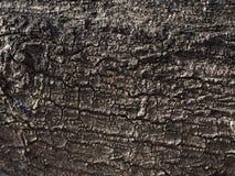 Baumbeschaffenheitsmango Lizenzfreies Stockfoto