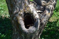 Baumbilder geschnitzt durch Vögel Stockfotos