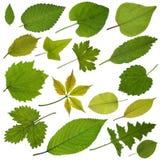 Baumblätter lizenzfreie stockfotos