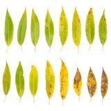 Baumblätter getrennt auf weißem Hintergrund lizenzfreie stockfotos