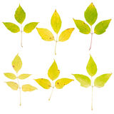 Baumblätter getrennt auf weißem Hintergrund lizenzfreies stockfoto