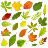 Baumblätter lizenzfreies stockbild