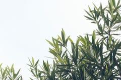 Baumblätter und -himmel Lizenzfreie Stockfotos