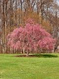 Baumblüte stockbilder