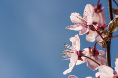 Baumblüte Lizenzfreie Stockfotografie