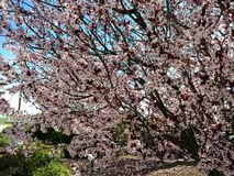 Baumblüten Stockbilder